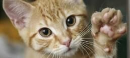 Il carattere del gatto iStock 000008162989Large