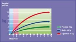 curva della crescita 300x168 1