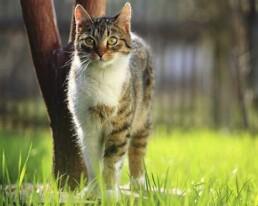 esigenze del gatto anziano