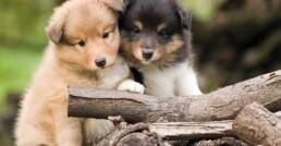 foto cuccioli indice