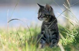 gatti in estate