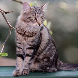 gattino adulto