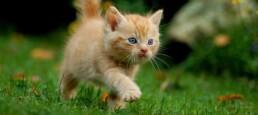 la guida del gattino1