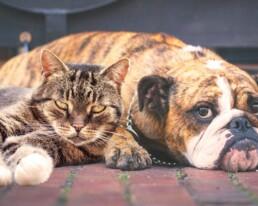 obesita cane gatto