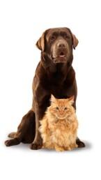 home valori cane gatto