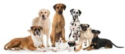 immagine home cani