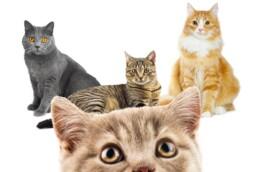 immagine pagina unica classe gatto