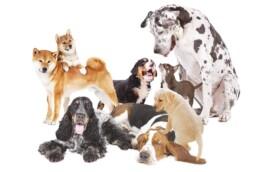 immagine pagina unica natura cane