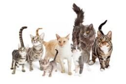 immagine pagina unica natura gatto