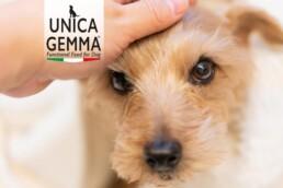 immagine home page UnicaGemma