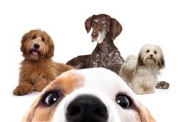 immagine pagina unica classe cane